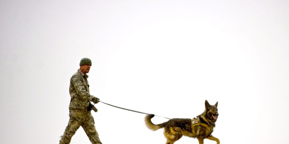 New deployable kennels for military dogs mitigate temperature extremes